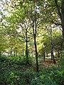 A narrow strip of woodland - geograph.org.uk - 1031041.jpg