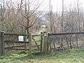 A new plantation - geograph.org.uk - 1713622.jpg