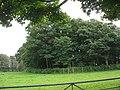 A round plantation opposite Gadlys - geograph.org.uk - 952422.jpg