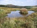 A small pond near the Stiel Burn - geograph.org.uk - 257209.jpg
