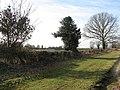 A well-established hedge - geograph.org.uk - 1140988.jpg