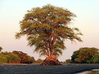 Turkana Basin Large endorheic basin mainly in Kenya and Ethiopia