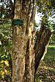 Acharya Jagadish Chandra Bose Indian Botanic Garden - Howrah 2011-01-08 9846.JPG