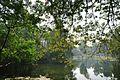 Acharya Jagadish Chandra Bose Indian Botanic Garden - Howrah 2011-01-08 9861.JPG