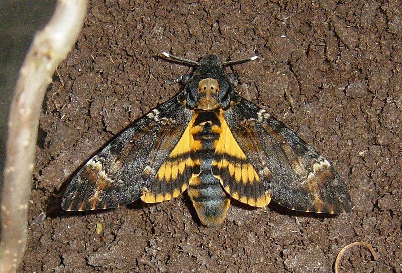 The death of the moth summary