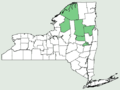 Achillea ptarmica NY-dist-map.png