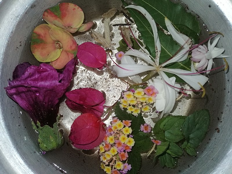 File:Acqua di San Giovanni 23-06-2020.jpg Description English: San Giovanni 's Water: Flowers & Plants, Catholic ritual for the summer solstice. Date24 June 2020, 00:11:42 SourceOwn work AuthorNessma Elaassar
