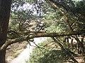 Aekingerzand - 2009 - panoramio (1).jpg