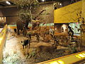 African display - Springfield Science Museum - Springfield, MA - DSC03344.JPG