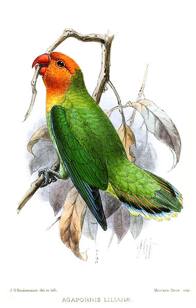 File:AgapornisLilianaeKeulemans.jpg
