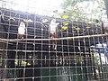 Albay Park & Wildlife 3.jpg