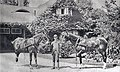 Allan Chisholm (1866–1918) and horses in front of the coach house and gardener's cottage (26821139763).jpg