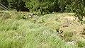 Allanaquoich Farm (Mar Lodge Estate) (16JUL17) (24).jpg