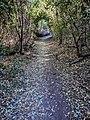 Alley Blue Sky Ecological Reserve.jpg
