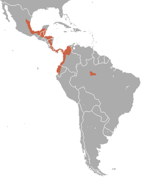 Amazona autumnalis range map.png