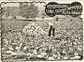 American farmers' manual (1902) (17932295480).jpg