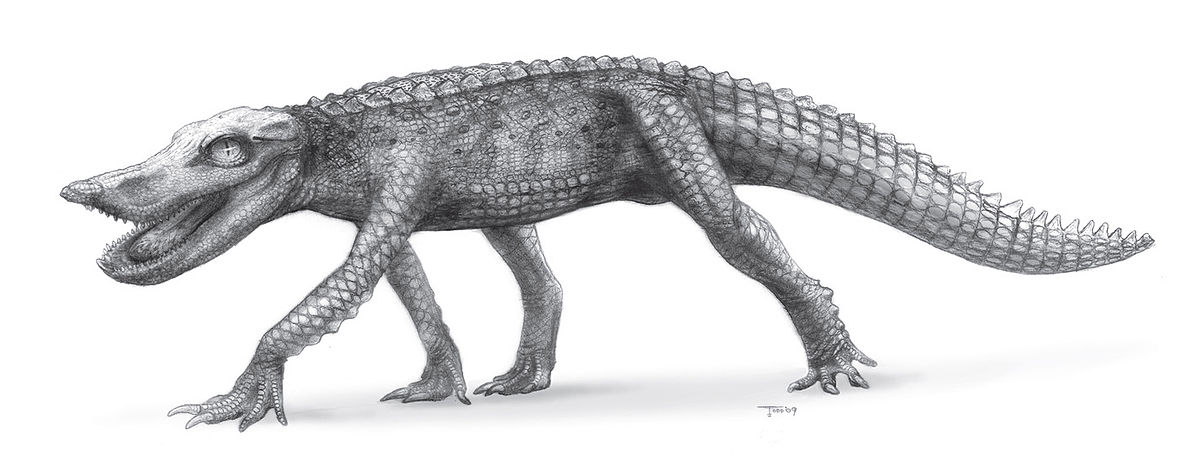 Anatosuchus minor - Wikispecies
