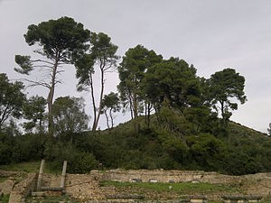 Historia Plantarum (Theophrastus) - Aleppo pines, like these at ancient Olympia, yielded wood suitable for shipbuilding, according to Theophrastus in Book 5.