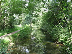 Wooded canal in summer, with footpath