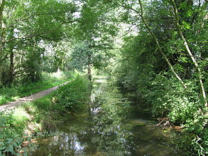 Andover Canal - Remains of the Andover canal near Romsey