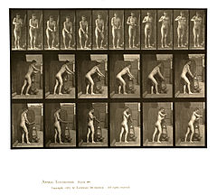 Animal locomotion. Plate 395 (Boston Public Library).jpg