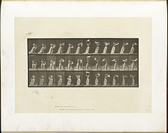 Animal locomotion. Plate 421 (Boston Public Library).jpg
