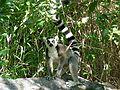 Anja réserve (Madagascar) - 03.JPG