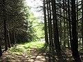 Approaching the Cwm Wnion road - geograph.org.uk - 536658.jpg