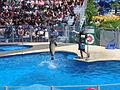 Apresentação das focas no Quebec Aquarium.JPG
