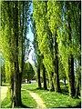 April Parc Natural Freiburg Germany - Master Landscape Rhine Valley Photography 2014 Landgut Mundenhof - panoramio (50).jpg