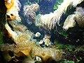 Aquarium de st malo - panoramio (2).jpg