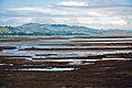 Aramoana Salt Marsh, Otago, New Zealand, 11th. Dec. 2010 - Flickr - PhillipC.jpg