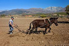 Arando con mula en Candeleda.jpg