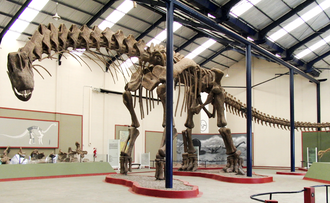 Argentinosaurus - Reconstructed skeleton, Museo Municipal Carmen Funes, Plaza Huincul, Argentina
