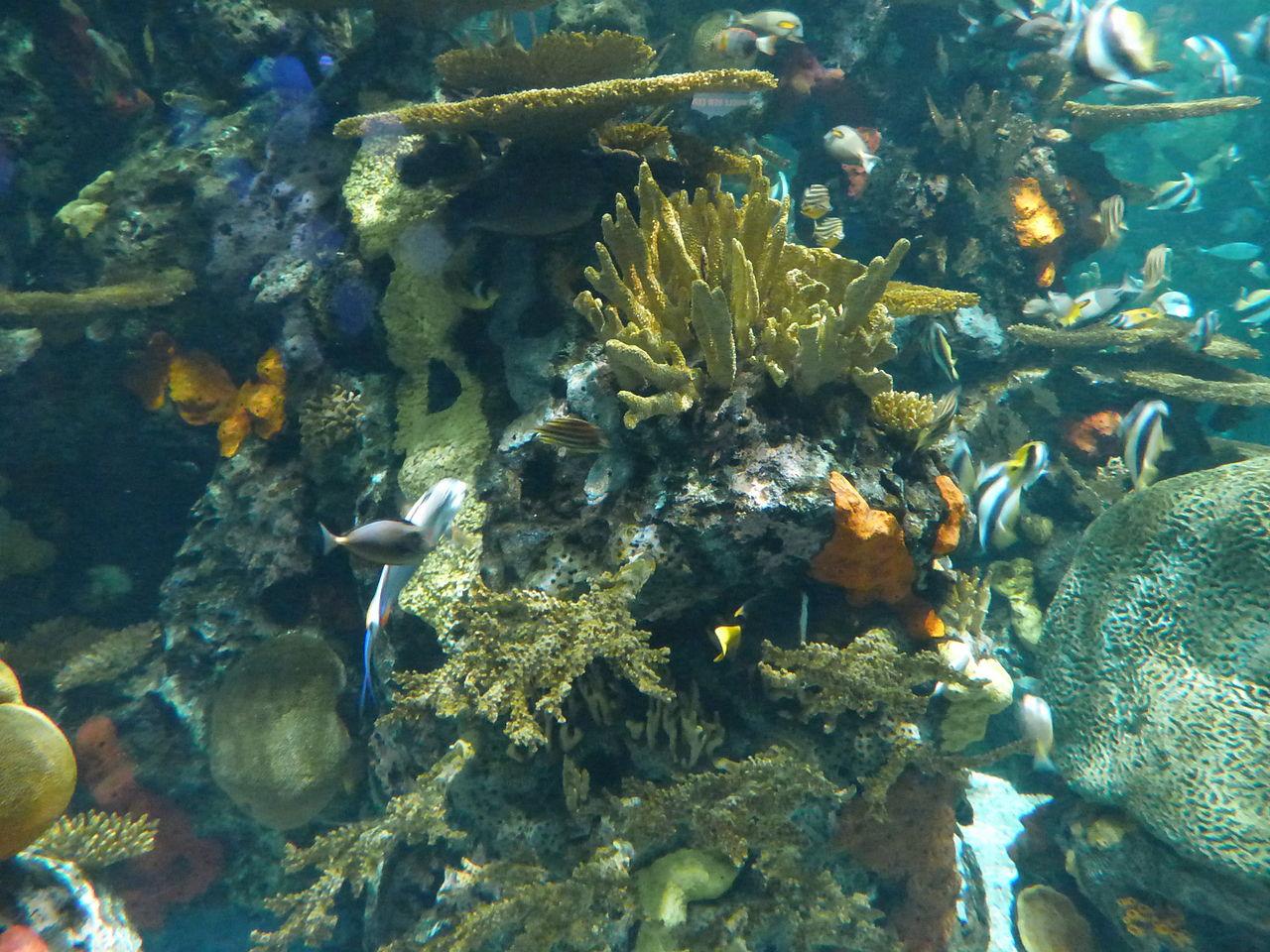 File Artificial Coral Reef Ripley 39 S Aquarium Myrtle Beach