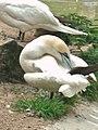 Artis, Zoo, Dierentuin - panoramio (95).jpg
