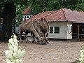 Artis Zoo, Amsterdam (7621144020).jpg