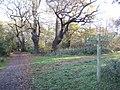 Ashtead Common, Woodcock Corner - geograph.org.uk - 1054454.jpg