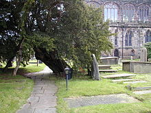 A yew tree leaning over a path in the churchyard, with part of the church visible to the right