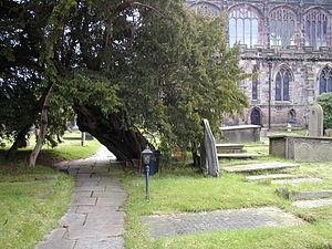 St Mary's Church, Astbury - Image: Astbury Church Yew Tree
