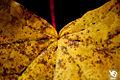 Autumn (5131279335).jpg