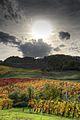 Autumn - Bettola, Vezzano sul Crostolo, Reggio Emilia, Italy - October 29, 2013 02.jpg