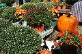 Autumn Display at Garden Shop.jpg