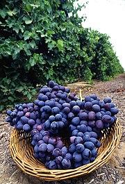 Photographie montrant une corbeille de raisin noir de variété autumn royal.
