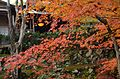 Autumn foliage 2012 (8253622522).jpg
