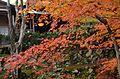 Autumn foliage 2012 (8253622522).jpg