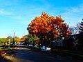Autumn in Madison - panoramio (20).jpg