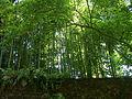 Bambous derrière le mur 2.jpg