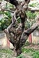 Bark I IMG 4179.jpg