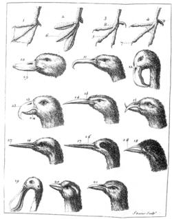 Barrère Pierre 1690-1755 Ornithologiae.png